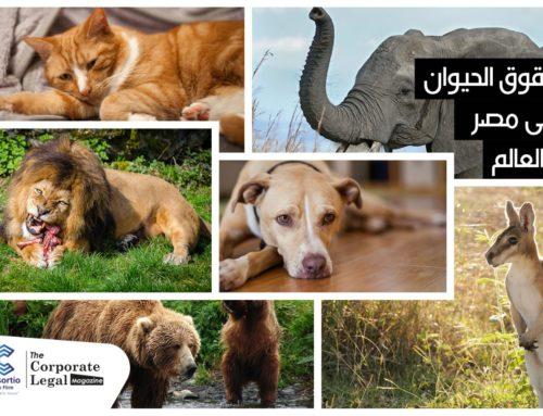 حقوق الحيوان في مصر و في العالم